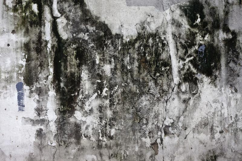 Rohrbruch Folgen Schimmelbildung im Mauerwerk